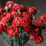 The Best Occasions To Give Flowers