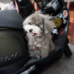 Factors To Consider Before Taking Your Pet On Vacation