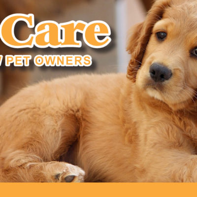 7 Pet Care Tips For Beginners