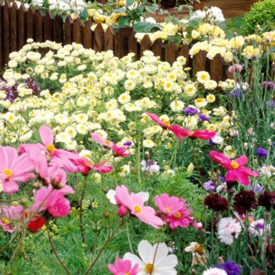 Travis Cadman – Benefits of Gardening