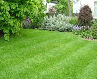 How to Maintain Your Lawn & Garden on a Busy Schedule in Brisbane