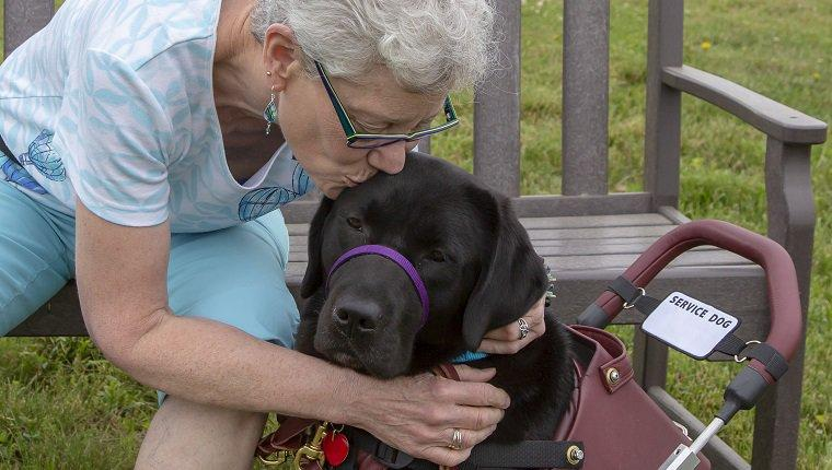"A service dog named Lucee enjoys a kiss from her recipient during a three week ""team training"" for this newly matched team. The service dog has been trained by Canine Partners for Life, a non-profit service dog training organization in Cochranville, PA, USA. The recipient has MS."