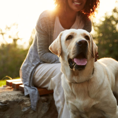Why your local vet is invaluable to your family