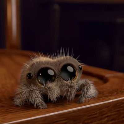 Effective Tips to Get Rid of Spiders from Your Home
